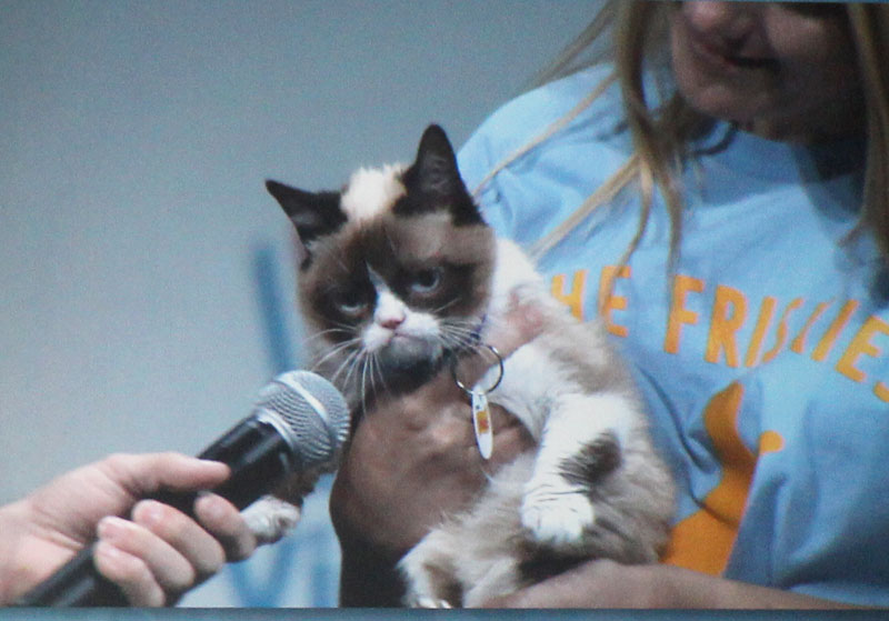 grumpy-cat-friskies-vidcon-catchannel.com